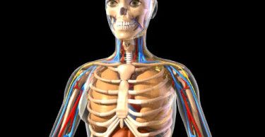 3d animated anatomy software