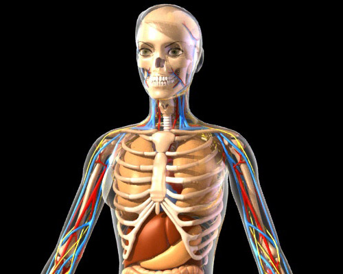 3d Animated Anatomy Review Buy 3d Animated Anatomy Software Download