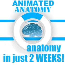 3D Animated Anatomy Review – Buy 3D Animated Anatomy Software