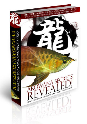 Arowana Fish Secrets Revealed PDF eBook eBook