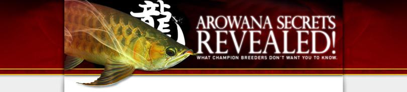 Arowana fish secrets revealed